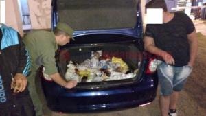 Incautaron gallos de pelea que se encontraban ocultos en un vehículo