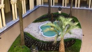 La palmera donada por Corrientes ya está en Casa Rosada