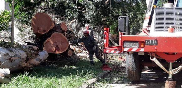 Tras el pedido, retiraron los árboles de la escuela Tobar García